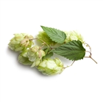 Mount Hood Bare Root Hop Plant