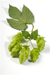 Nugget Bare Root Hop Plant