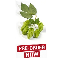 Nugget Bare Root Hop Plant (Pre-Order)