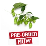 Styrian Golding Bare Root Hop Plant (Pre-Order)