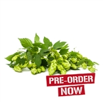 Santiam Hop Plant in 2 Litre Pot (Pre-Order)