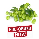 Saaz Bare Root Hop Plant (Pre-Order)