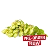 Willamette Hop Plant in 2 Litre Pot (Pre-Order)