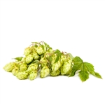 Willamette Bare Root Hop Plant