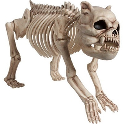 The Cemetery Dog Skeleton is a creepy looking canine skeleton designed to give your decor a spooky look this Halloween. The lifelike plastic skeleton features jointed legs and a head that turns. Use indoors or outdoors! Measures 8 inches by 16 inches.