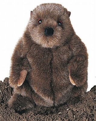 Chuckwood Groundhog