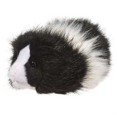 Angora Long-haired Guinea Pig