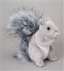 Shasta Grey Squirrel