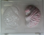 3D Realistic Brain Chocolate Mold - CCH048