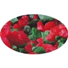 Red and Green Peppermint Candy Crunch