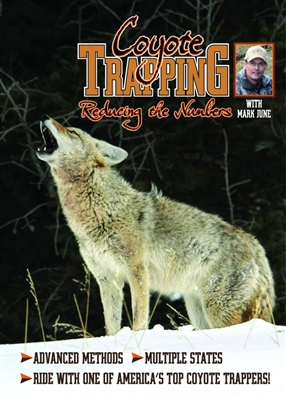 Coyote Trapping Reducing the Numbers - Mark June