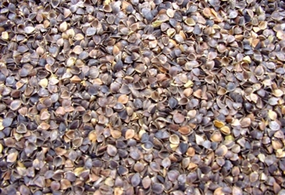 Buckwheat Hulls - 22 Pounds