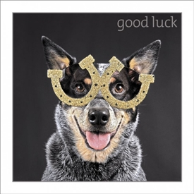 Good Luck Dog Card