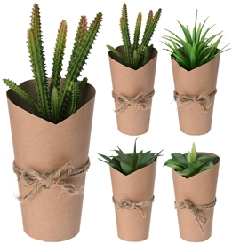 Succulent Plant In Pot 4 Assorted