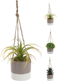 Hanging Plant In Ceramic Pot 3 Assorted