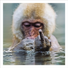 Chimp Finger Card 16cm