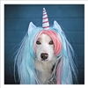 Unicorn Dog Card 16cm