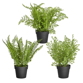 DUE JAN Potted Ferns 3 Assorted 29cm