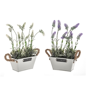 DUE JAN Potted Lavender Flowers In Metal Trugh 2 Assorted