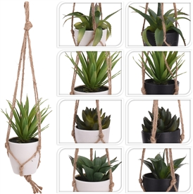 DUE JULY-Plant In Hanging Pot 8 Assorted