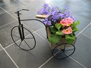 Wooden Tricycle Planter