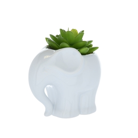 Succulent Plant In Elephant Pot 12.5cm