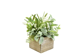 Herbs And Snowdrops Arrangement In A Square, Wooden Box 24cm