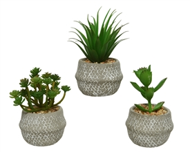 Artificial Green Potted Plant In Pot- 3 Assorted- 14cm