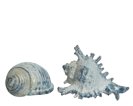 Blue And White Polyresin Sea Shell- 2 Assorted. 12Cm