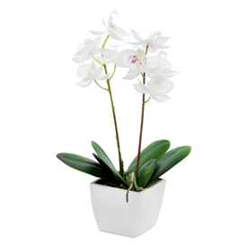 Potted Cream Orchid 33cm