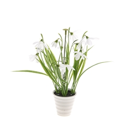 Potted Snowdrop Plant 22cm