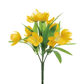 Yellow Crocus Bush 23cm