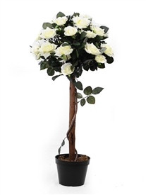 Potted Cream Rose Tree 92cm