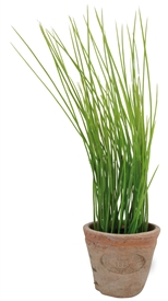 Artificial Chives In Terracotta Pot