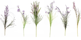 Purple Wild Flower Single Stem 56cm