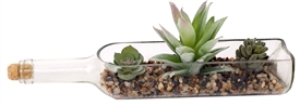 Succulents in Glass Bottle 28cm