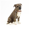 Sitting Brown Staffie - Walkies 18cm