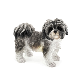 Shih Tzu - Black & White