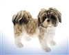 Brown & White Shihtzu