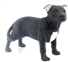 Black & White Staffordshire Bull Terrier
