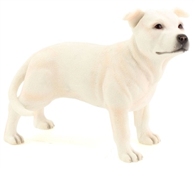 White Staff Bull Terrier