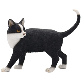 Standing Black And White Cat