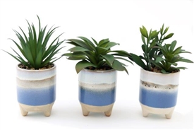 Potting Shed Succulent In Ceramic Pot 3 Assorted 21cm