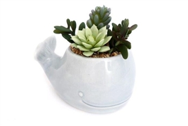 Succulent In Whale Pot 17cm