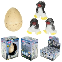 Hatching Penguin Egg