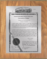 "Patent Plaques Custom Wall Hanging Traditional PVP Plaque - 8"" x 10"" Silver and Oak."