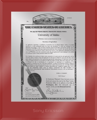 "Patent Plaques Custom Wall Hanging Ultramodern PVP Plaque - 10.5"" x 13"" Silver and Red Acrylic."