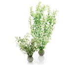 BiOrb Winter Flower Plant Pack Medium