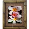 """Plumeria Sandwich"", Plumeria Art Print. Beautiful photogrpah of pink and white plumeria's, a small pink Plumeria trying to push its way into the sunlight between two large white Plumeria's.  Matted in a Natural Grass Mat and framed in a handmade..."