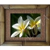 """Two Plumeria's"" Plumeria Art Print. Beautiful  photogrpah of two Plumeria's  along with two plumeria buds. Matted in a Natural Grass Mat and framed in a handmade Natural Bamboo Frame. Bamboo Frame is hand sanded and stained twice. Made in..."